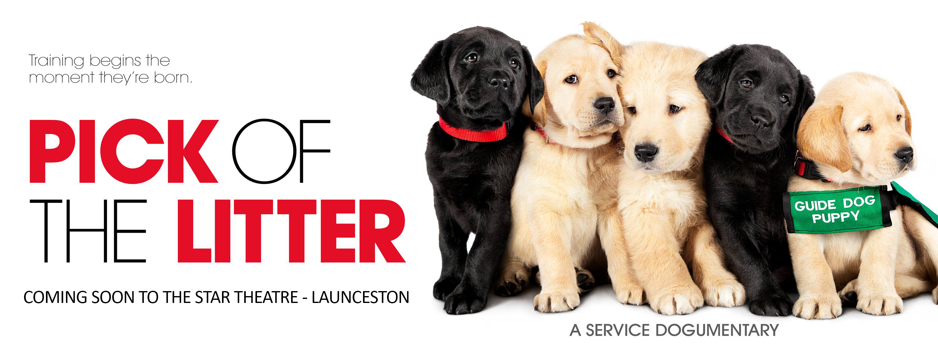 Pick of the litter movie graphic